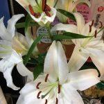 仕事運は北西に白い花